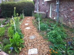 Medicinal Herb garden 1 yr