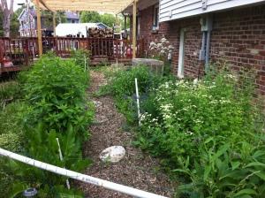Medicinal Herb garden 2 year