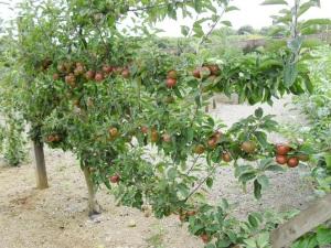 picture from sharonhockenhull.wordpress.com
